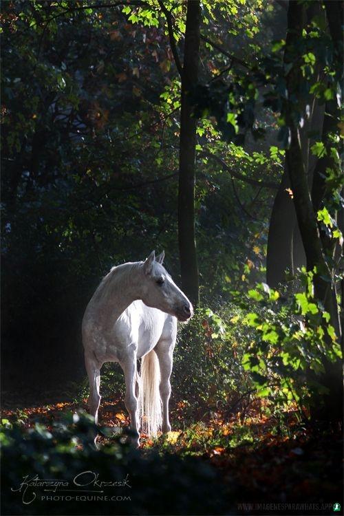 Imagenes-de-caballos-17