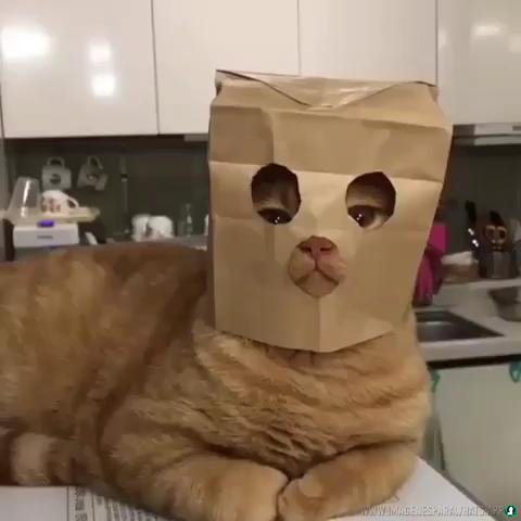 Imagenes-de-gatos-18