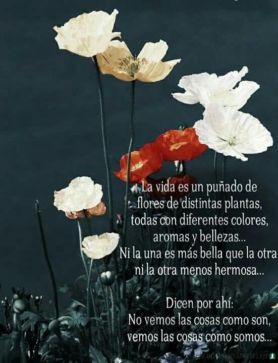 Flores-con-frases-7