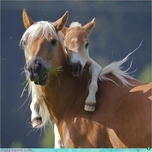 imagenes de caballos (987)