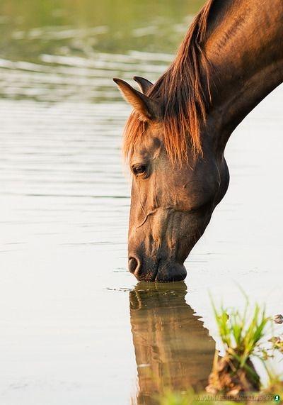 Imagenes-de-caballos-76