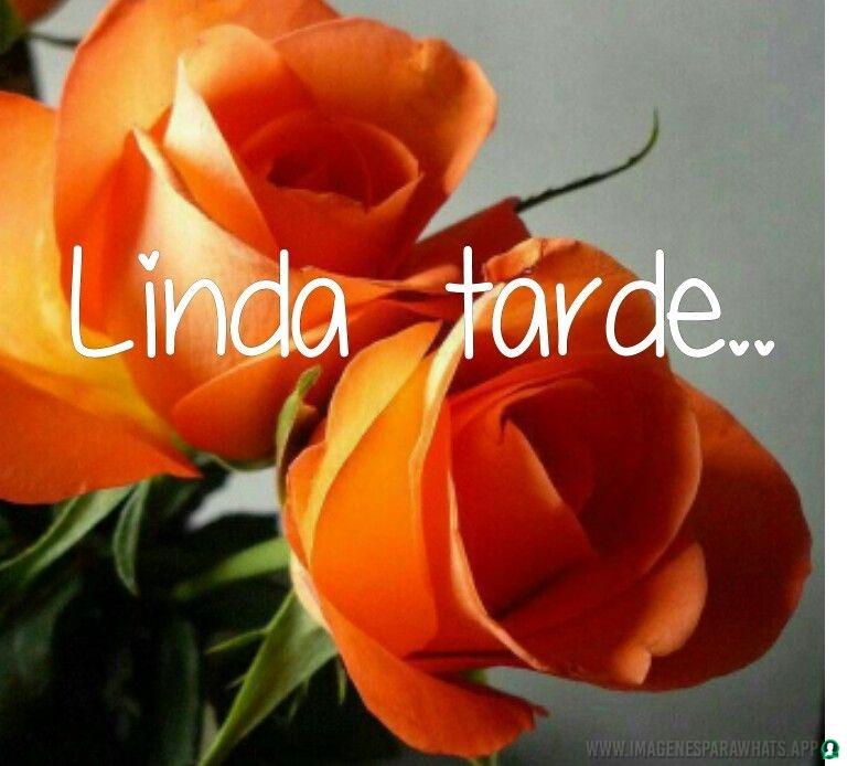 flores con frases (847)