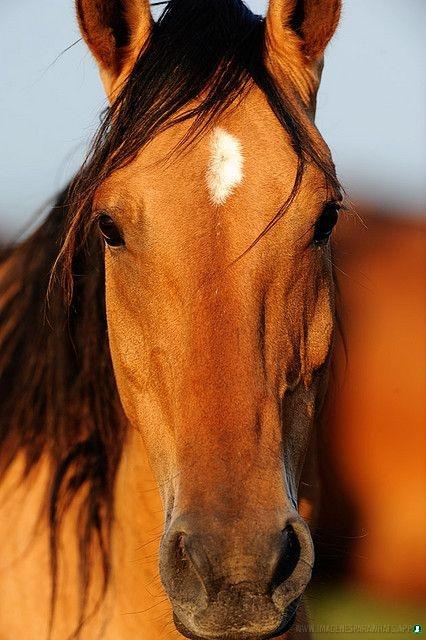 Imagenes-de-caballos-35