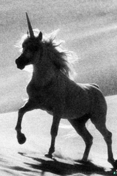 Imagenes-de-unicornios-71