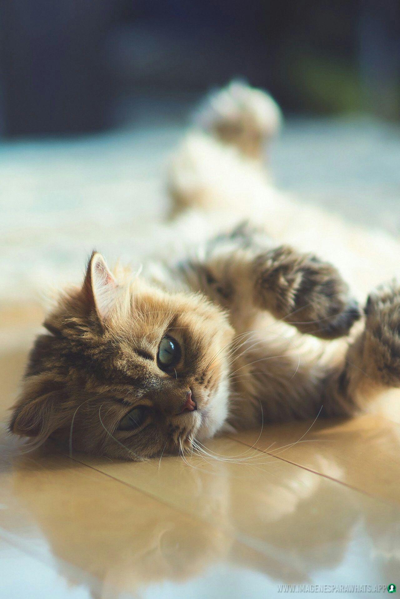 Imagenes-de-gatos-32